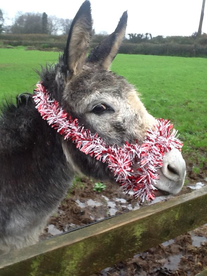 Donkey xmas2